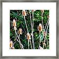 Bittersweet And Thistles Framed Print by Mindy Newman