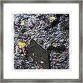 Black Rock At Graue Mill Framed Print