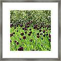 Black Tulips Framed Print