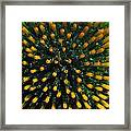 Bloomer Framed Print