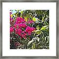 Blossoms And Breadfruit Framed Print