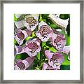 Blow The Trumpet Flora Framed Print by Andee Design