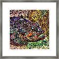 Blue Eyed Fish Framed Print