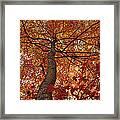 Blue Ridge Autumn Leaves 1.3 Framed Print
