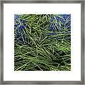 Blue Water Green Grass Glacier National Park Framed Print