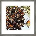 Bouquet Of Butterflies Framed Print