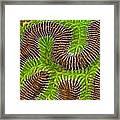 Brain Coral Framed Print