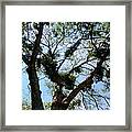 Branched Out Framed Print