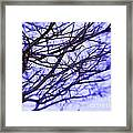 Branches In Winter Framed Print by Judi Bagwell