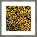 Branches Of Gold Framed Print