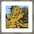 Bright Yellow Framed Print