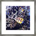 Brilliant Fish Aquarium Framed Print