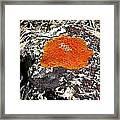 Brilliant Orange Lichen Framed Print