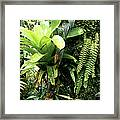 Bromeliad On Tree Trunk El Yunque National Forest Framed Print