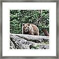 Brown Bear 209 Framed Print