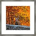 Buck Digital Painting - 01 Framed Print