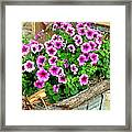 Bucket Of Blooms Framed Print