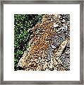 Bug Filled Bear Clawed Log Framed Print