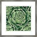 Bunch Of Artichokes Framed Print