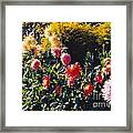 Butchart Cheerfulness Framed Print