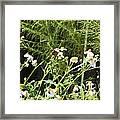 Butterfly 1 Framed Print