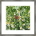 Butterfly 31 Framed Print