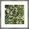 Butterfly 35 Framed Print