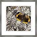 Butterfly Bark Framed Print