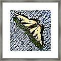 Butterfly In Rain Framed Print