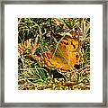 Butterfly In The Forest Framed Print