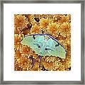 Butterfly On Flowers Framed Print