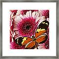 Butterfly On Pink Mum Framed Print