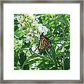 Butterfly On The Butterfly Bush Framed Print