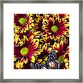Butterfly On Yellow Red Daises  Framed Print