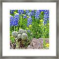 Cactus And Bluebonnets 2am-28694 Framed Print