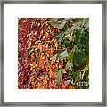 Calico By Nature Framed Print
