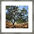 California Oaks Framed Print