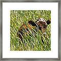 Camo Cow Framed Print