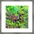 Can I Help You My Deer Framed Print