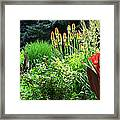 Canna Lily Garden Framed Print by Gretchen Wrede