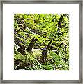 Carpet Of Ferns Framed Print