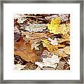 Carpet Of Leaves Framed Print