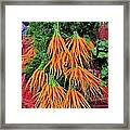 Carrot Bunches Framed Print