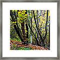 Cartoon Forest Framed Print