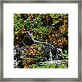 Casual Creek Framed Print