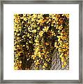 Cat's Claws Vine Framed Print