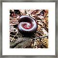 Center Centipede Framed Print