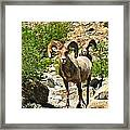Chance Encounters Le Framed Print