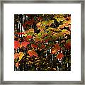 Changing Of The Colors Framed Print