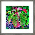 Changing Woodbine Framed Print